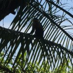 monkey in palm tree