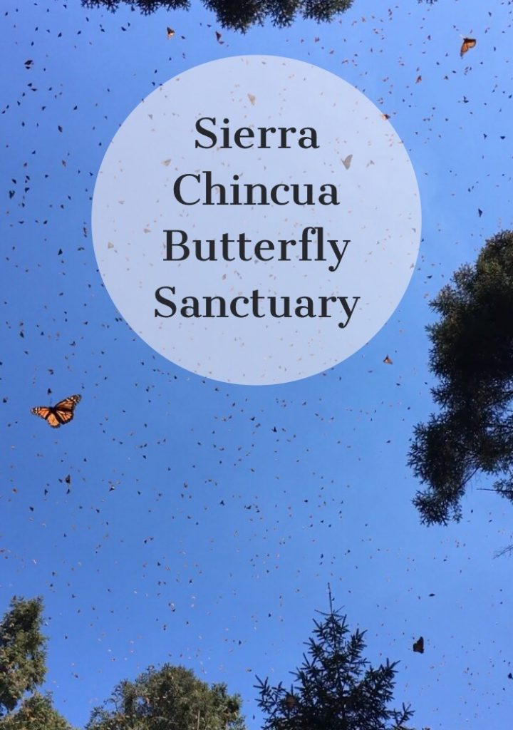Sierra Chincua Butterfly Sanctuary